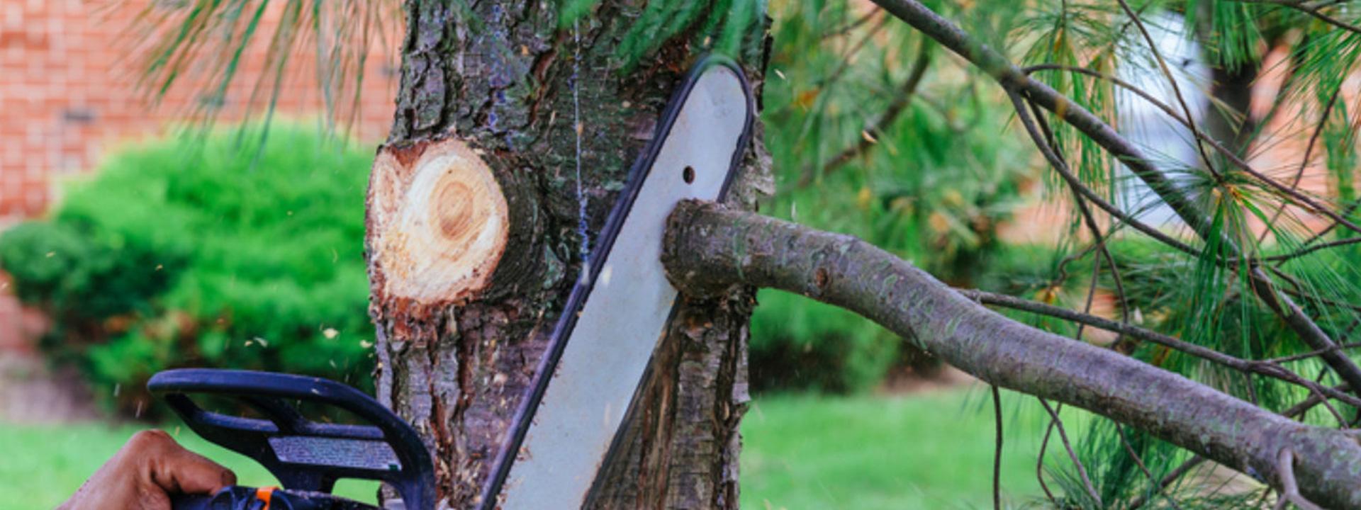 Miért fontos a kertrendezés során a nagyobb fák visszavágása?
